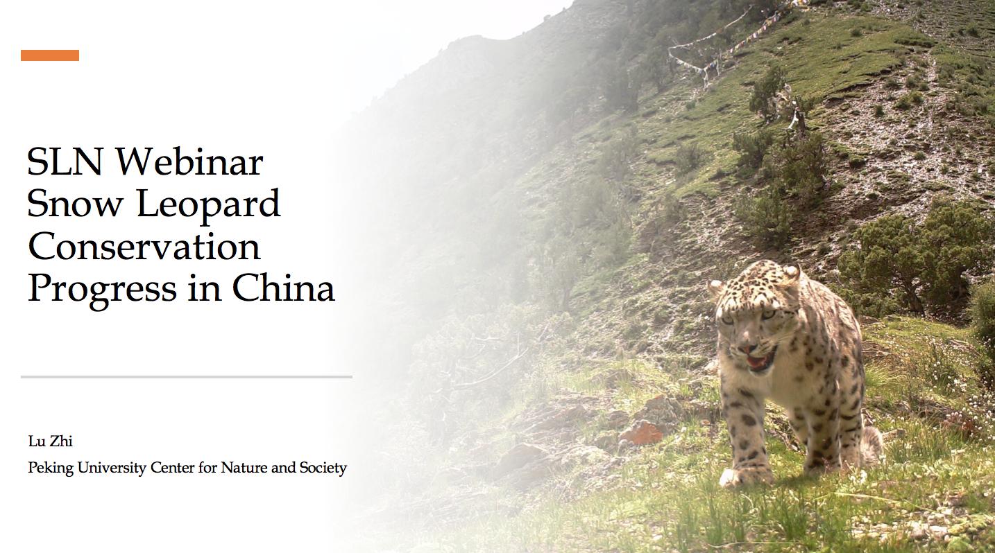 Webinar by Dr Lu Zhi – Progress in Snow Leopard Conservation May 12, 2020